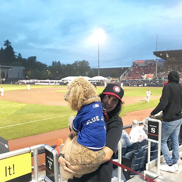 @doodle.louu was not impressed with Dog Day #AtTheNat. . . #vancouver #canadians #canadiansbaseball #basedball #baseball #morethanagame #vancanadians #natbailey #natbaileystadium #dogday #goldendoodle #bluejays