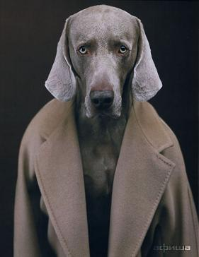 the notorious mum likes dogs in coats