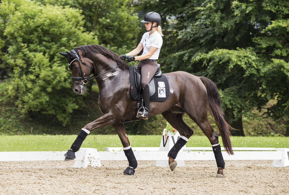 Atterupgaards Botticelli and Stud Atterupgaard rider Selina Solberg Vittinghus during the Danish election of Young Horses for World Championships at Broholm. Photo: H2R
