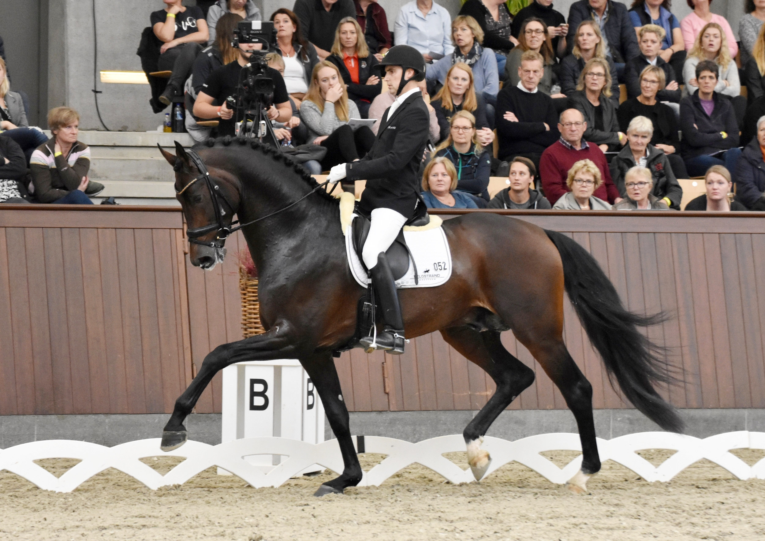 Revolution and Andreas Helgstrand - photo credit: Helgstrand Dressage/Mia Bach