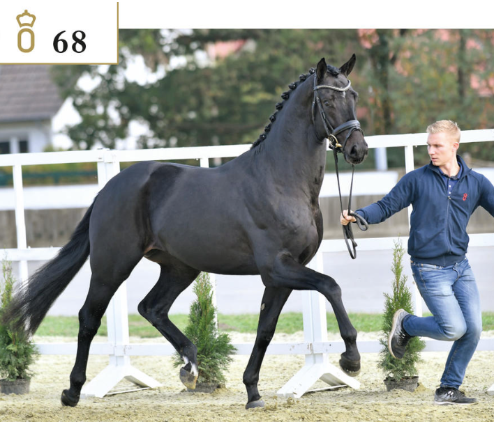Favorite from H2R - no 68 by Grand Galaxy Win / Don Schufro / Rawage Quintus