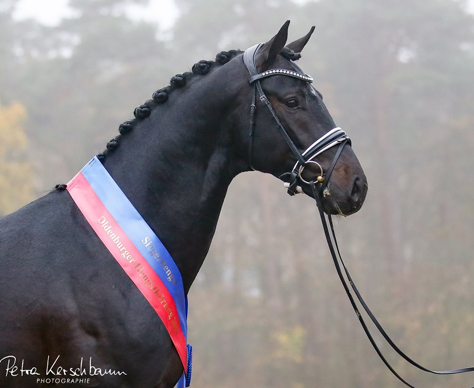 Gigabyte by Grand Galaxy Win T/Blue Hors Don Schufro