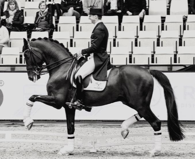 Sezuan and Patrik Kittel during Danish Warmblood stallion show 2018 - photo credit: H2R