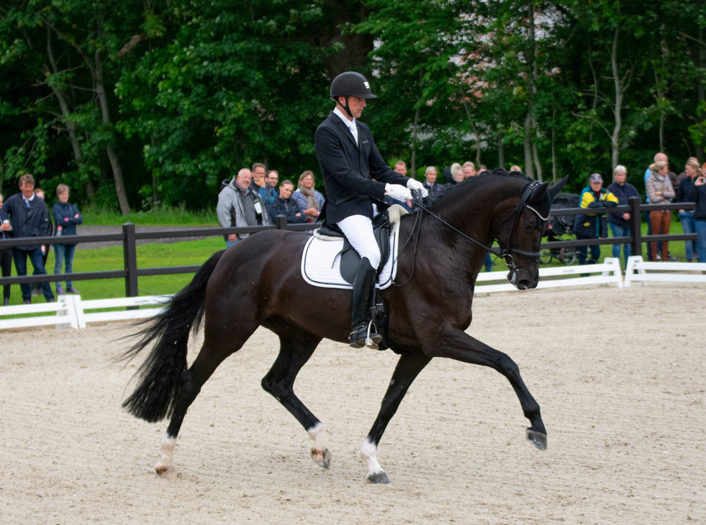 Queenparks Wendy by Sezuan / Blue Hors Soprano with Andreas Helgstrand. Danish Young Horse Championship winner in March, showing a very strong performance with top qualities for WCYH - photo credit: Mia Bach