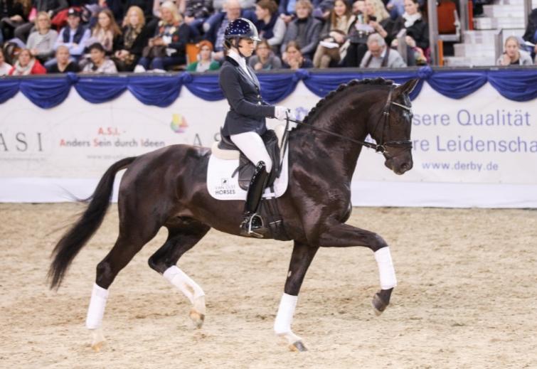 """Van Olst Horses stallion Kjento and Charlotte Fry winner of """"half final"""" 5 year old horses"""