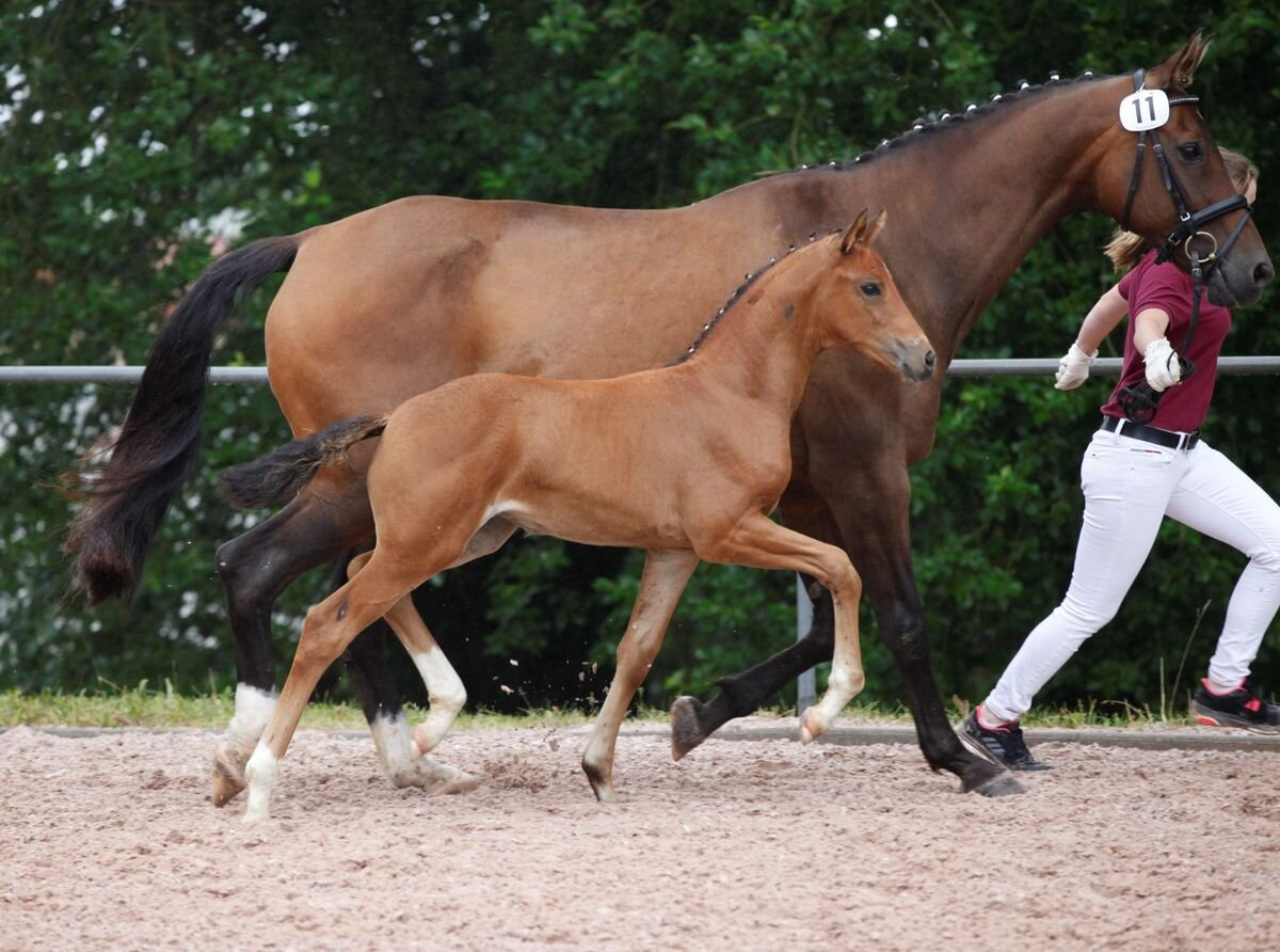 Filly by Floriscount / Ars Vivendi