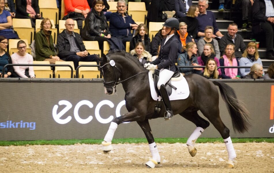 Suarez by Sezuan / Desperados and Anne-Mette Strandby Hansen/Danish Warmblood stallion licensing 2019. Photo: H2R