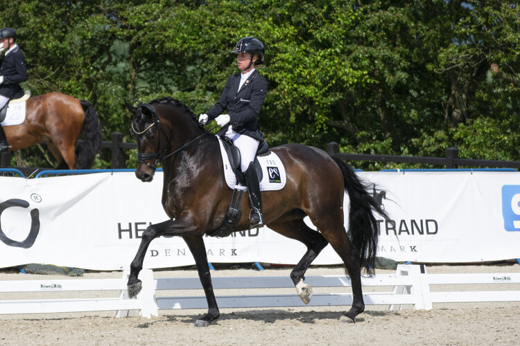 Atterupgaards Delorean, former Young Horse World Championship participant with Selina Solberg Vittinghus - photo credit: Mia Bach