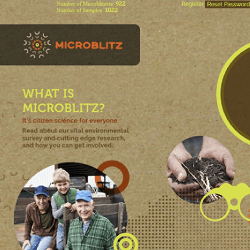 Website copywriting for the University of Western Australia's Microblitz project.