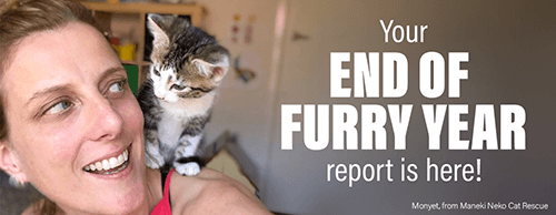 Impact report copywriting for PetRescue.png