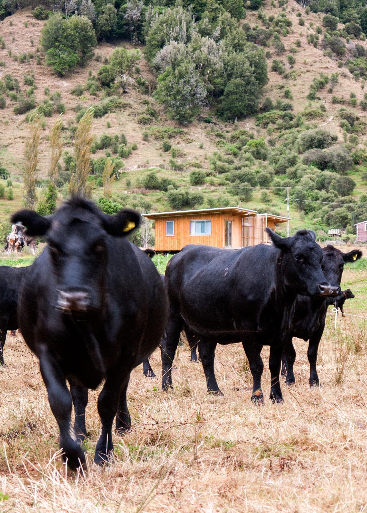 Frontier-Lodge-Exterior-Cow-Paddock.jpg