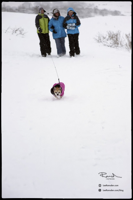 "<img src="" Dunstable Downs"" alt=""snow milfs house wives walking dogging dog walking"">"