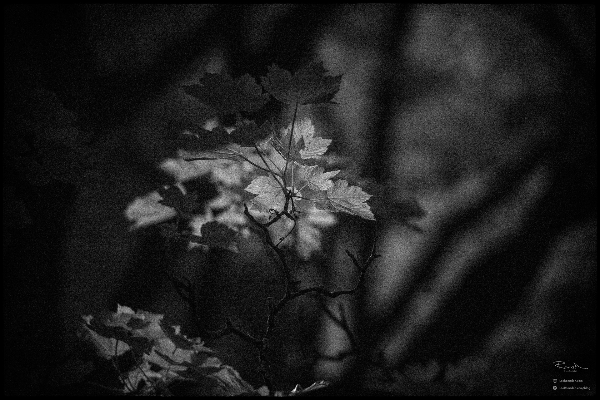 02 infrared leaves city park hoya r72 filter