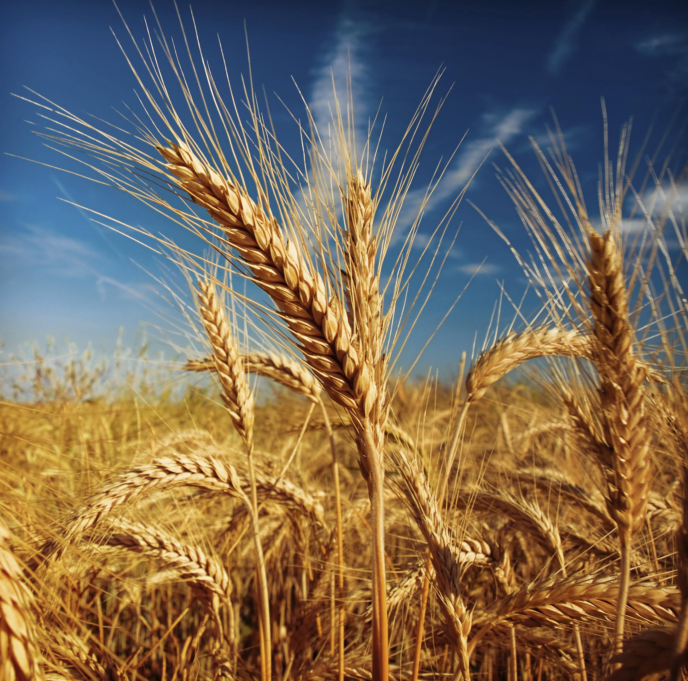 crops2.jpg