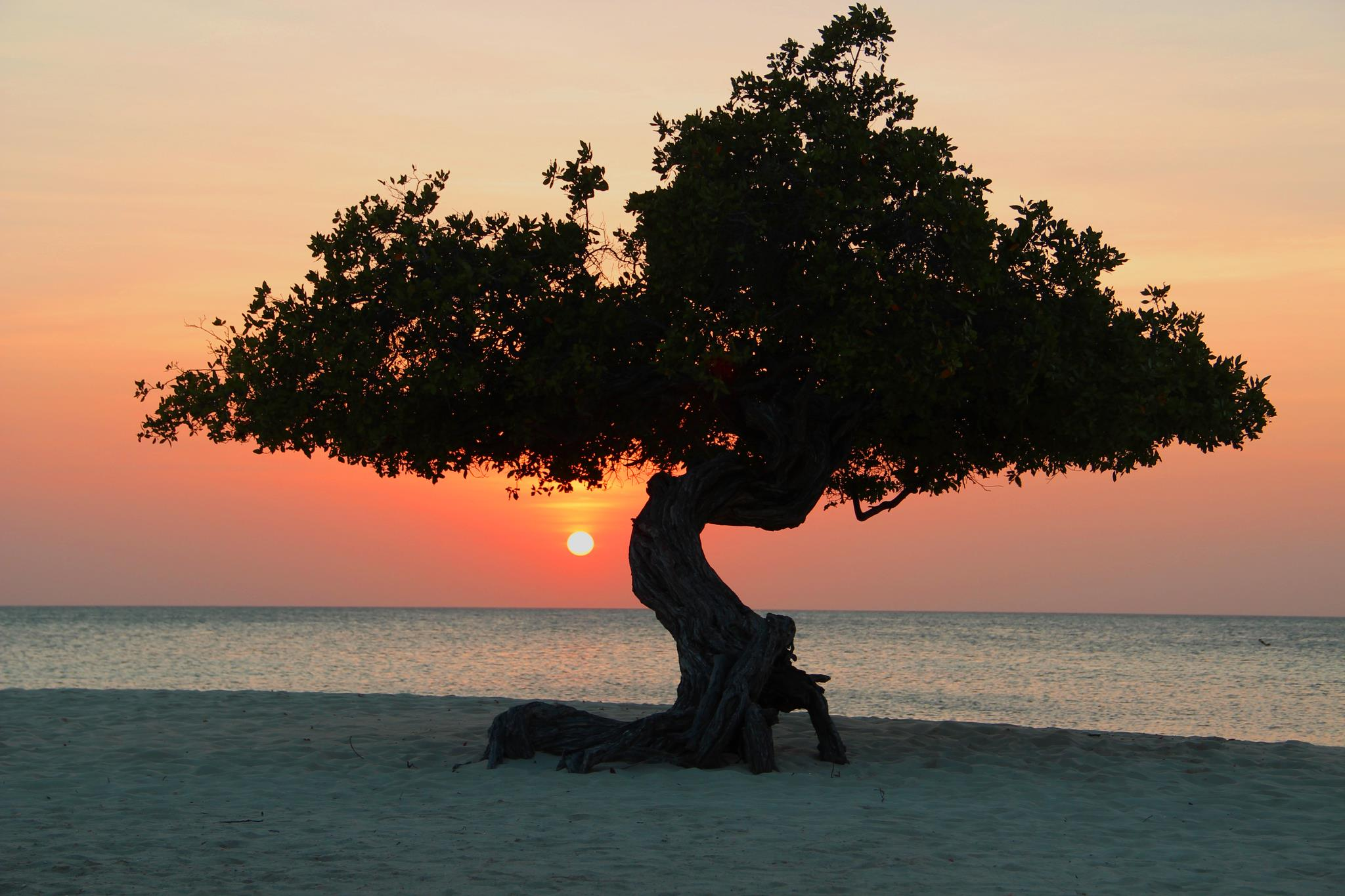 Debra Santilli tree.jpg