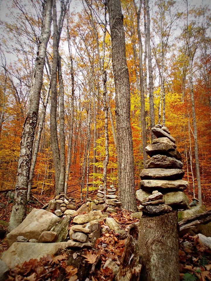 Sandra Pearson woods.jpg