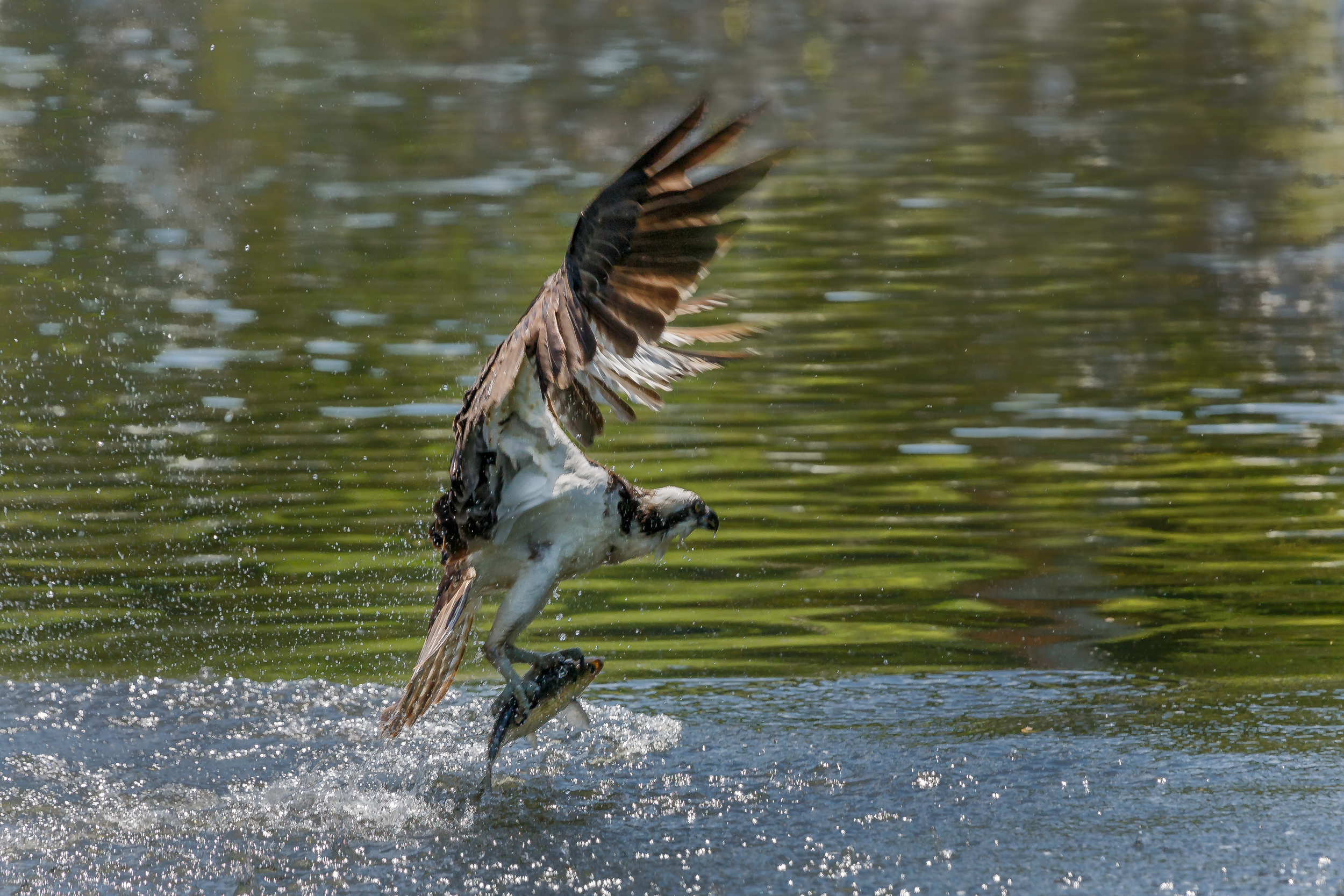 Osprey ME 2015-9637-Edit.jpg
