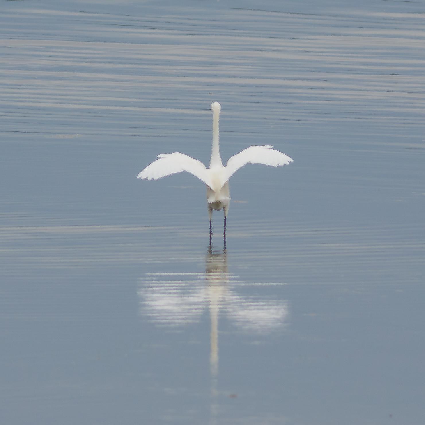 Egret - Image by Gary Detonnancourt