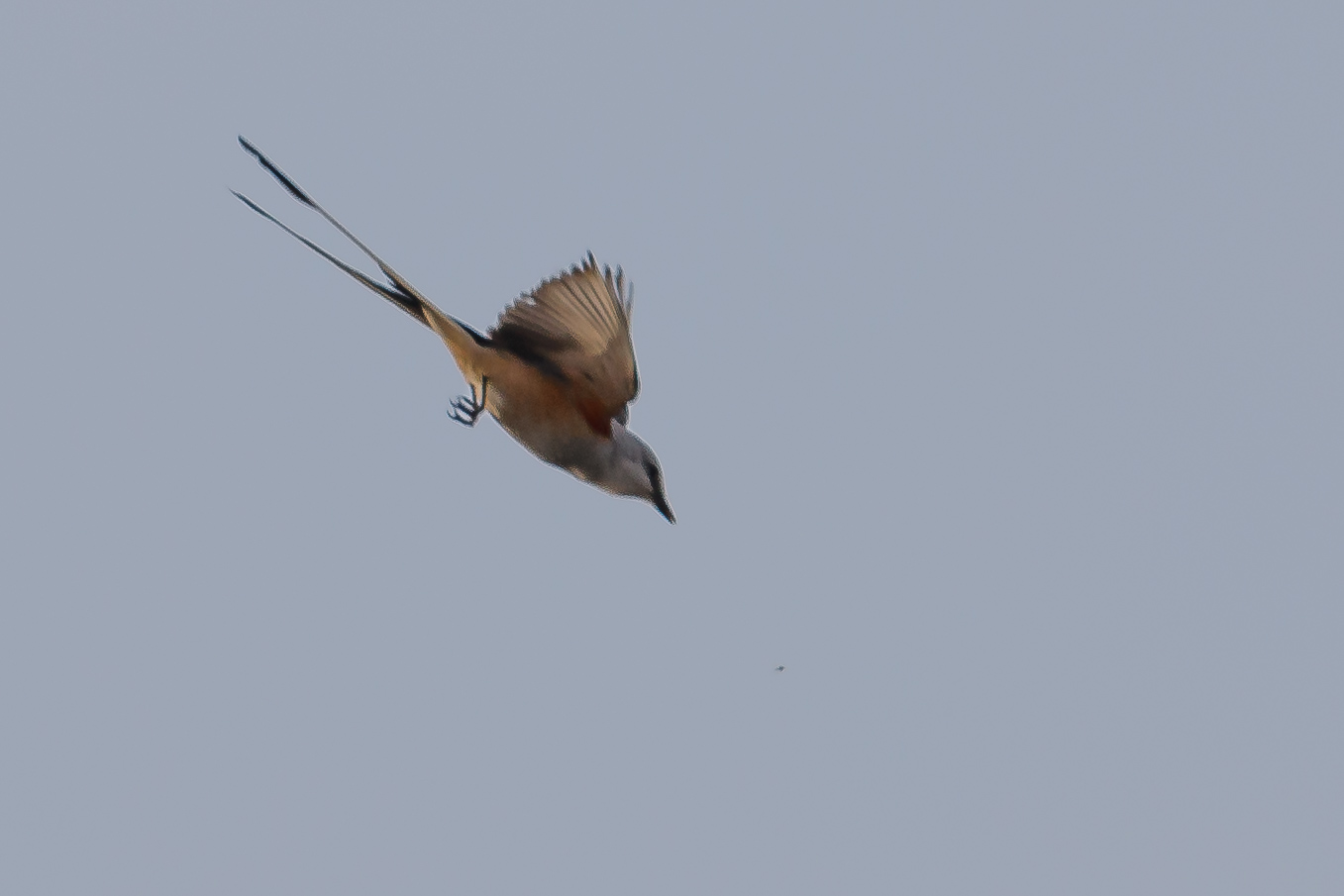 Trustom bird 2018-1673.jpg