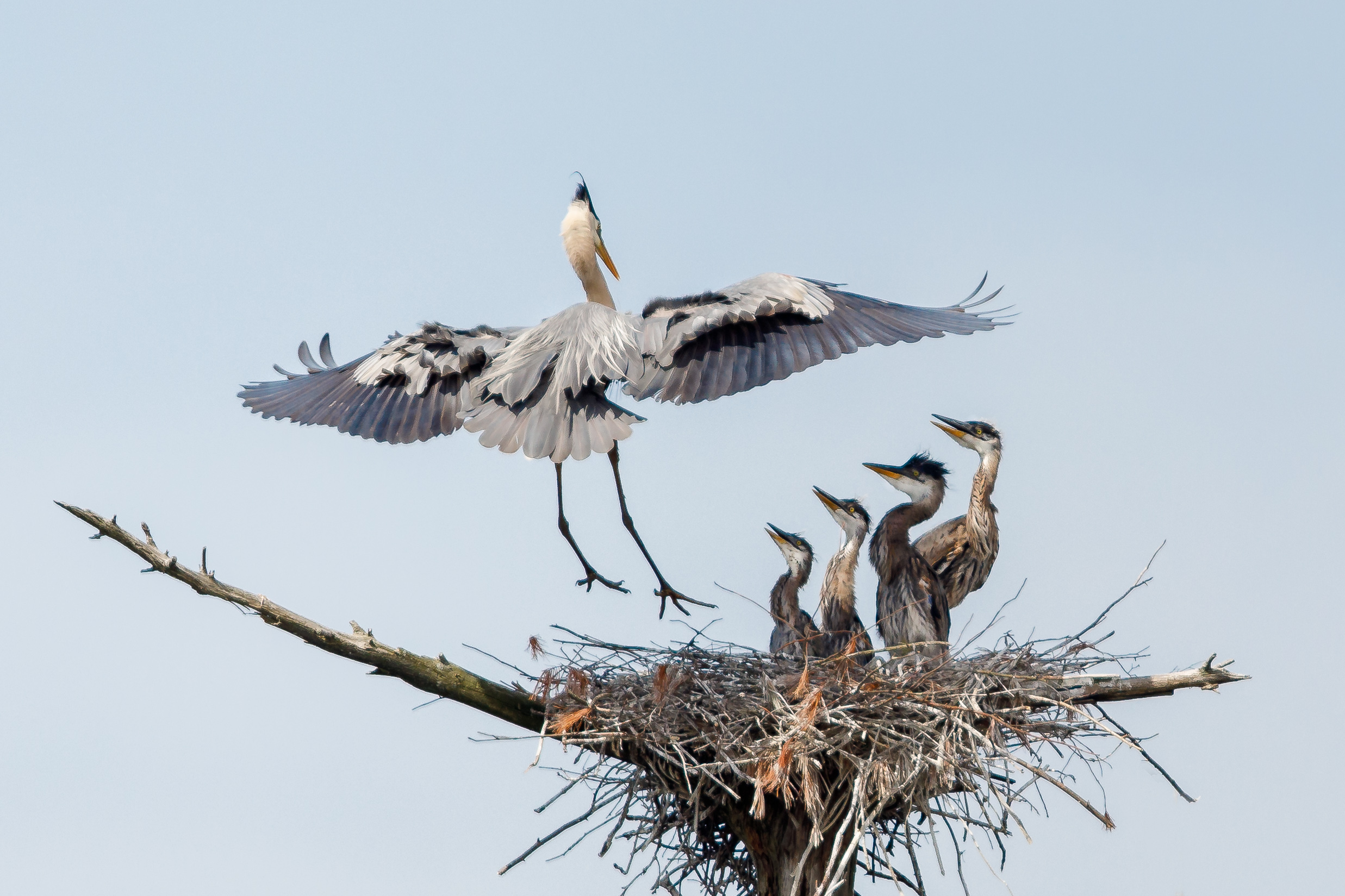 Heron Rookery 3-2535-Edit.jpg