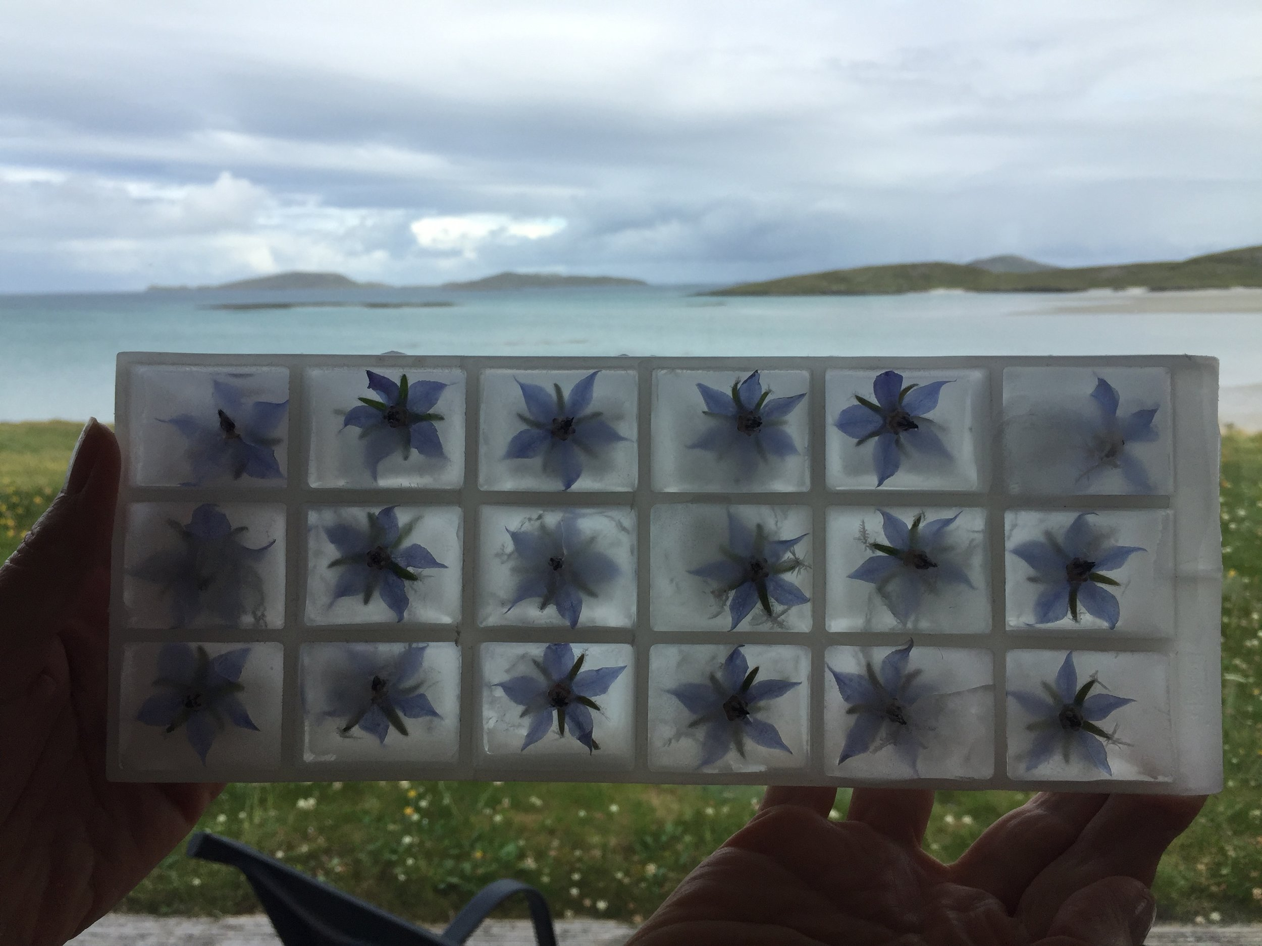 Ice-cubes made with foraged borage flowers