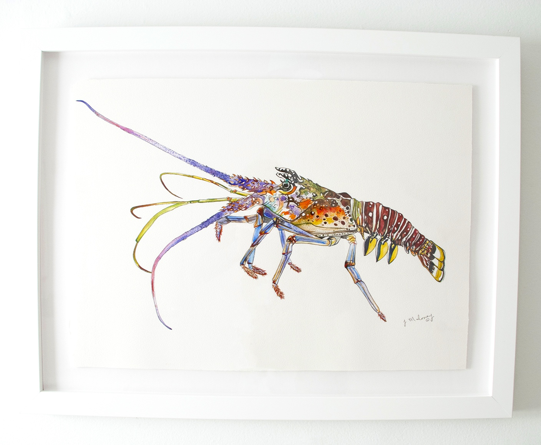 Rock Lobster, Watercolor & Ink