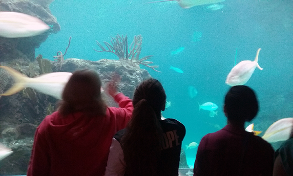 Mentor-Aquarium-small.jpg