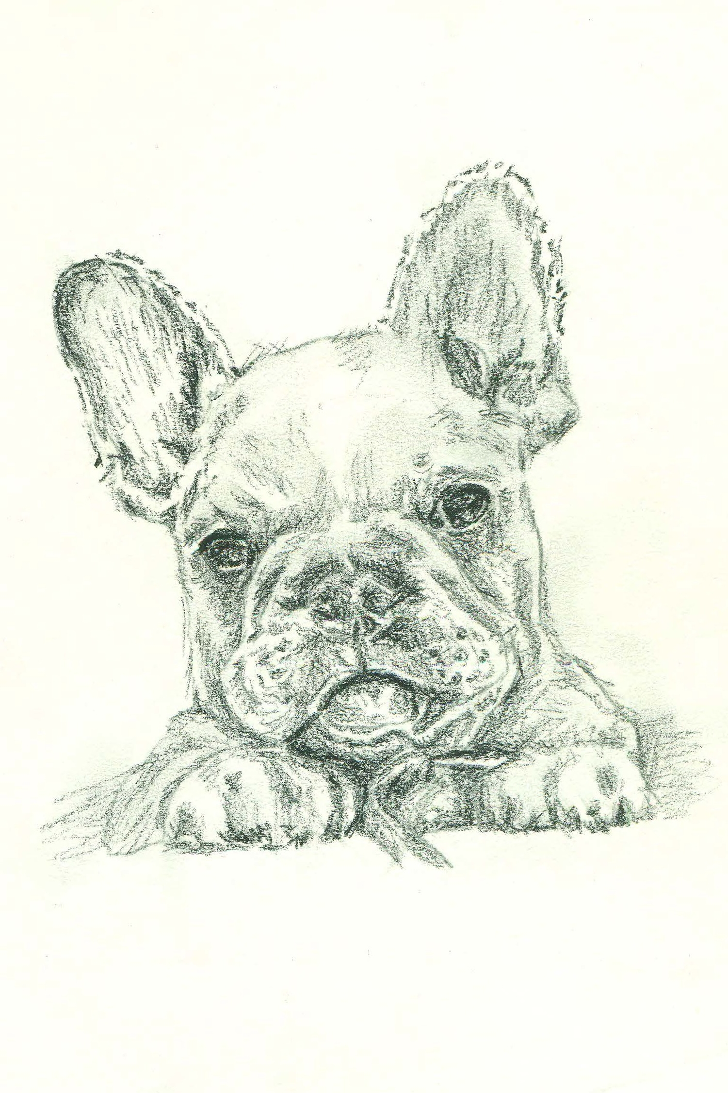 FrenchBullDog2.jpg