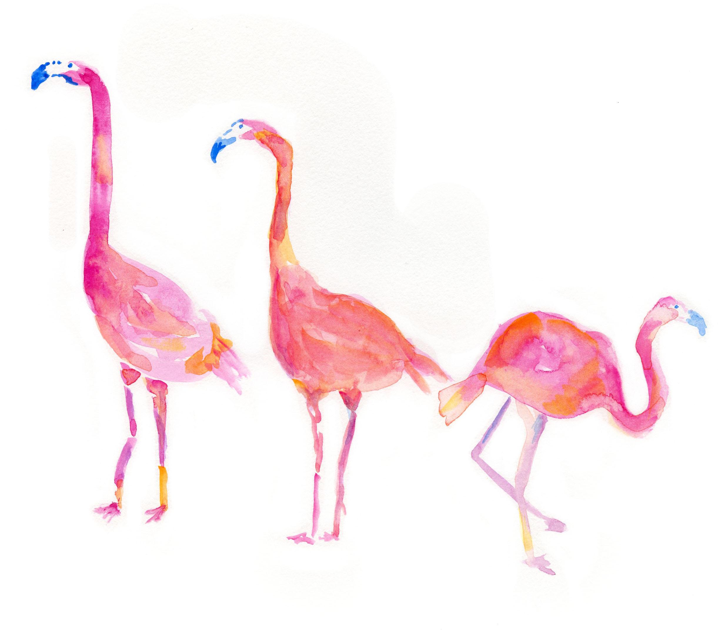 FlamingosWhite.jpg
