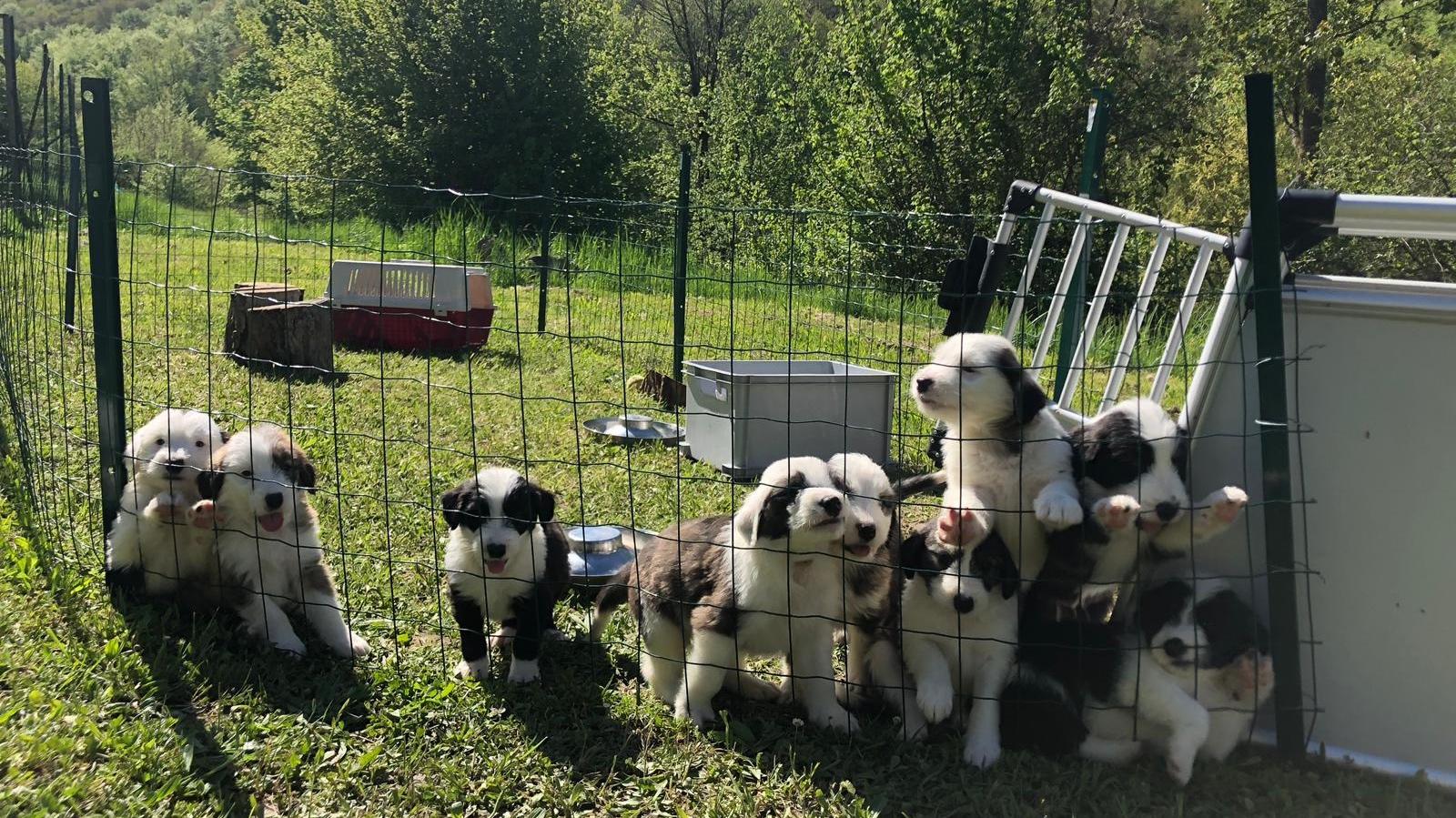 pups groep