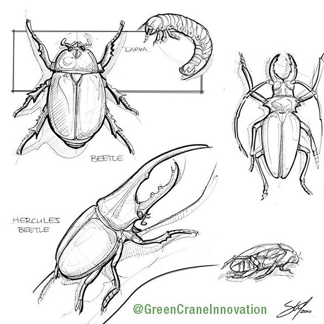 Beetle sketches! #biomimicry