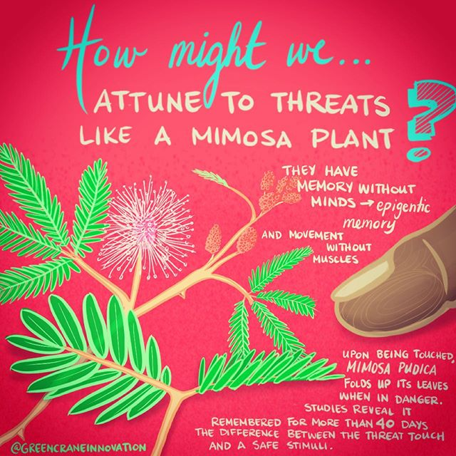 Memory without minds... Movement without muscles... plant intelligence!! #inktober2019 Day 002: MINDLESS  #biomimicry #inktober #biomimicrydesign #designthinking #howmightwe #plants #mimosa #mimosapudica #nature #problemsolving #problem #solving #climatestrike #bioinspired #bioinspireddesign #ecodesign #innovate #green #sustainable #plantintelligence #ecosystem #systemsthinking #smartwatch #creative #draw #drawing #sketch #think