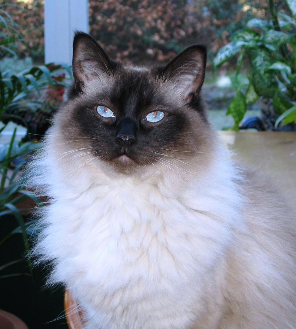Harry - Feline urine marking