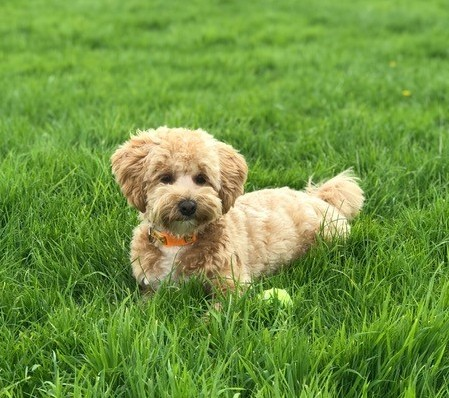 Bailey - Training and control problems