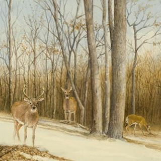 """""""Opening Day,"""" painted for The Nature Conservancy. Available for purchase through the link in profile. #nature #outdoors #conservancy #deer #longisland #thehamptons #hamptons #painting #art #artist"""