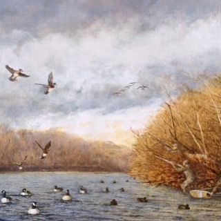 """""""This painting depicts a tandem pair of Wood Ducks committed over a mixed rig of Goose and Mallard decoys. Both Gunners are up and ready to start the day with four in the bag; and with an oncoming string of Canada geese just out of eyesight, another promising challenge awaits. This is Vito DeVito's fourteenth sponsor print for Ducks Unlimited and shows his strong commitment to the waterfowl resources and important habitats on Long Island."""" """"Kellis Pond is one of many fresh water ponds across Southampton that are vital for waterfowl, fish, and other wildlife. Not only do these ponds provide roosting and feeding opportunities in the surrounding agricultural fields, these ponds provide critical fresh water for birds that feed in the salt water marshes and tidal areas. This 19-acre pond's depth runs as deep as 100-feet, and according to local legend, has no bottom in some parts. Due to its' immense depth and spring sources, this pond has never gone dry, making it a reliable irrigation source for local agriculture. The depth and springs also make this one of the last bodies of fresh water to freeze in winter (if at all), making it a hotspot for waterfowl in the winter. The pond's deep, clean water supports a great number of fish, reptiles, amphibians, and local wildlife. Kellis Pond supports local production of Wood Ducks and Mallards in the spring and attracts many different species during the fall migration."""" """"Unanticipated Beginnings is copyrighted by Ducks Unlimited in a signed and numbered limited edition of 350 prints. These prints will be made available only to those individuals or corporations who become sponsor members of Ducks Unlimited during the 2015-2016 fund raising season at the minimum Bronze Sponsor contribution level of $250. Additionally there will be a limited series of 50 Silver Edition prints and 20 Gold Edition prints for giving at the Silver ($500) and Gold ($1,000) levels. Special personalized remarques and framing are available directly from the"""
