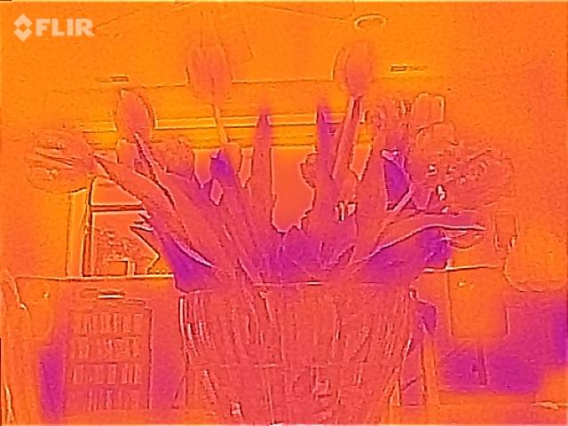 Flir ONE flowers: 80 x 60