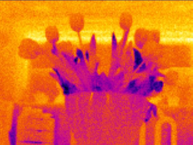 Fluke TiR110 flowers: 160 x 120