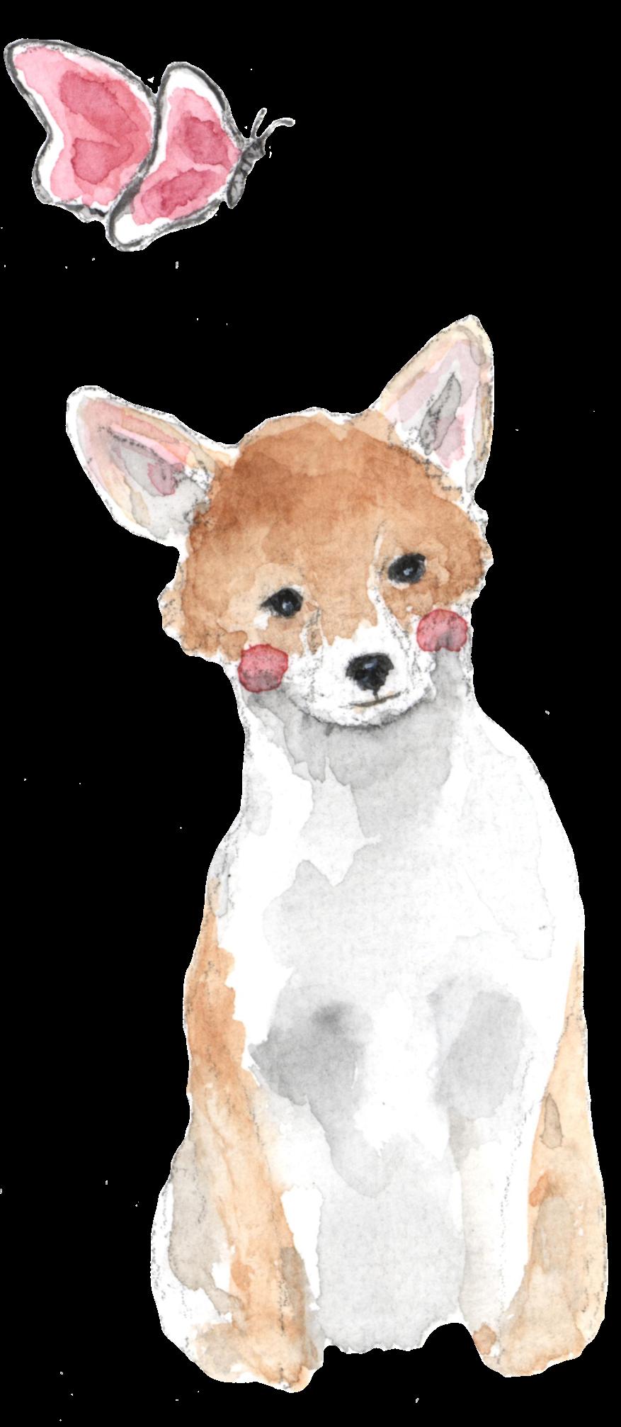 Foxglove Farm Cavachon Mascot
