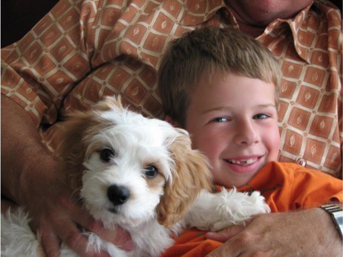 Buddy-Cavachon-puppy.png