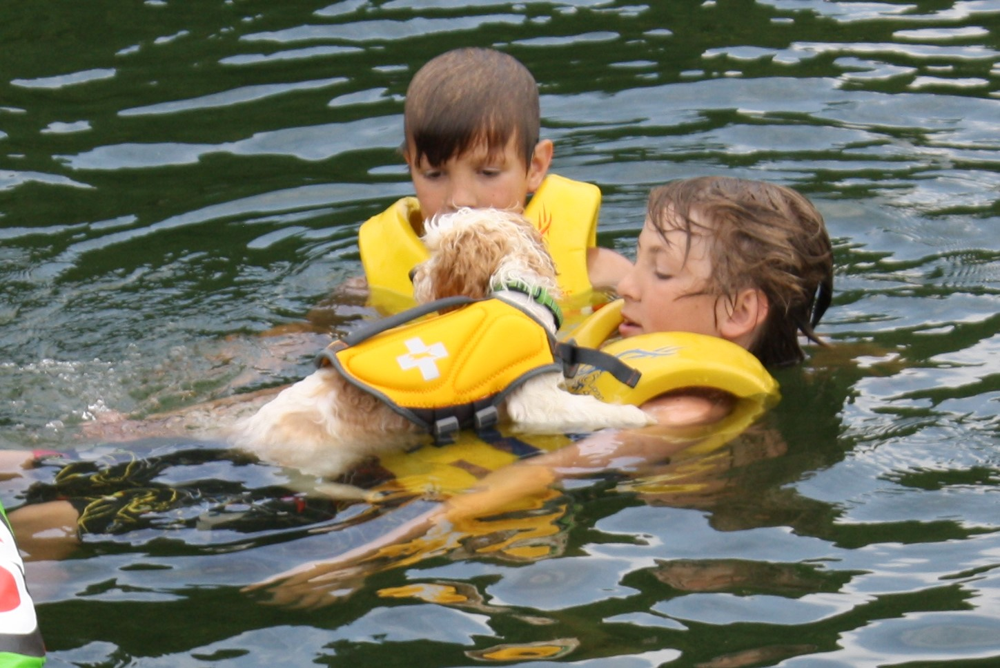I believe that kids who grow up with a great dog, yes, like a Cavachon, learn the nurturing skills that will make them better parents. Look at the loving concern these little brothers show while helping their new puppy learn to swim. Priceless!