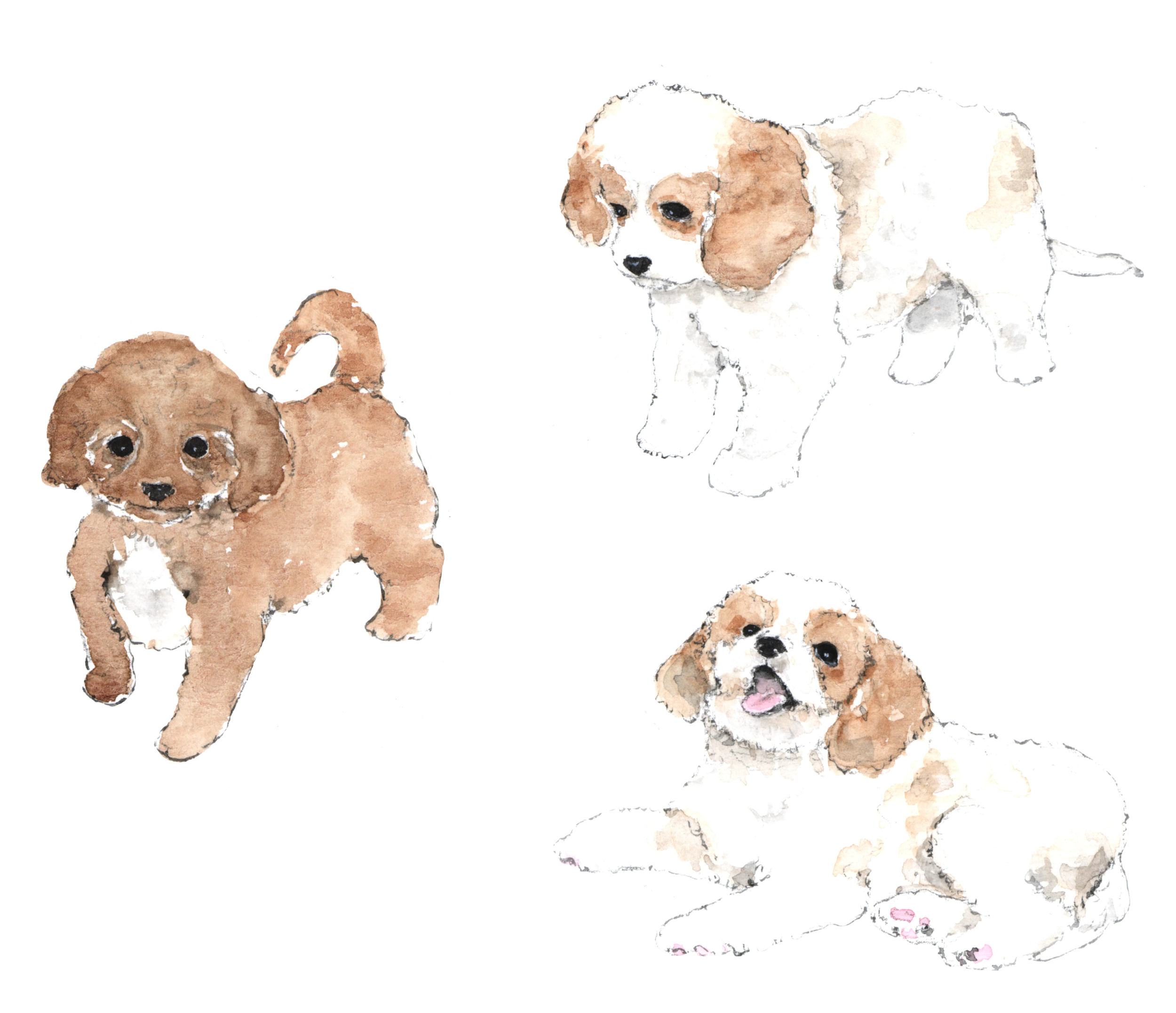 Cavachon puppy clipart by Vianne Chang