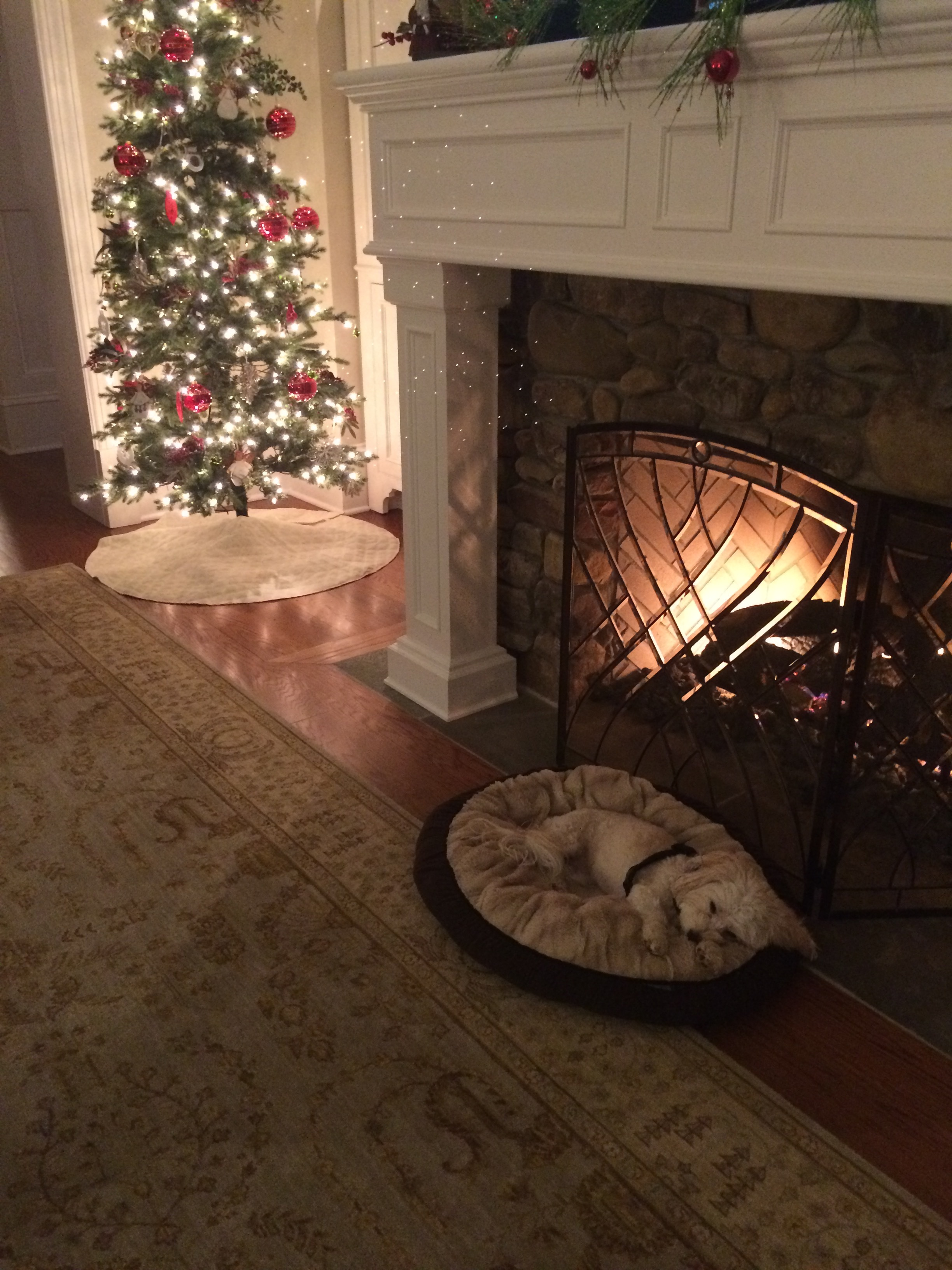 Abigail Brown waiting for Santa!