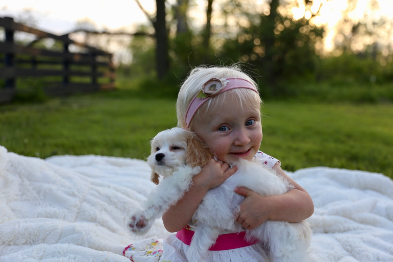 Cavachon puppy with little girl