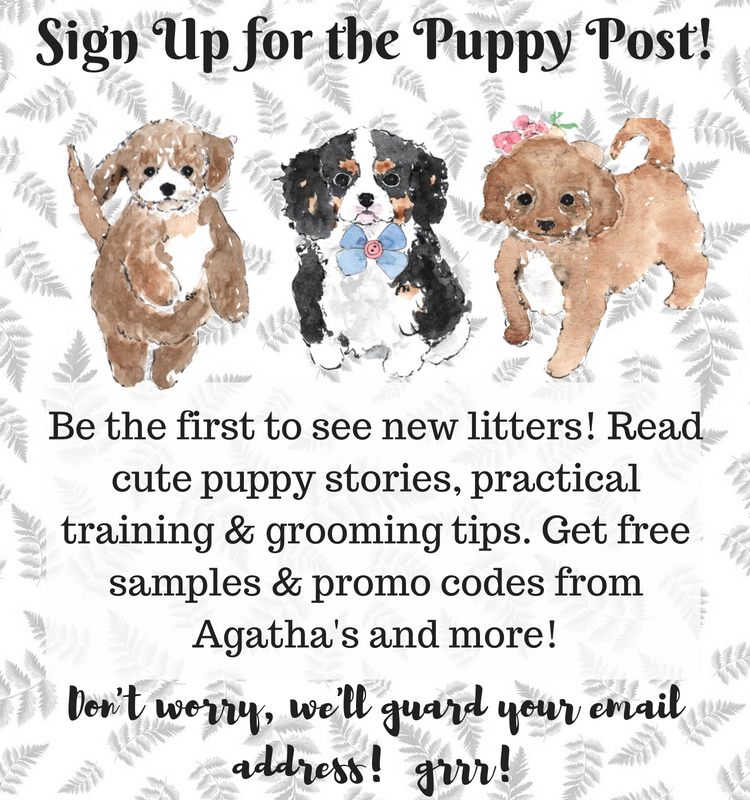 Puppy Post Signup with cute puppies