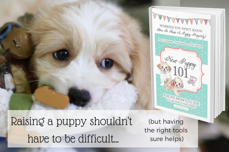 How to train a puppy ebook.jpg