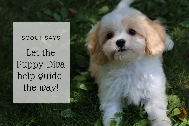Puppy training image of cute puppy.jpg