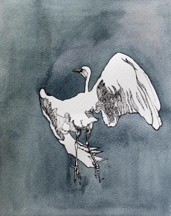 Egret in Flight    12 x 9    ink & watercolour on paper