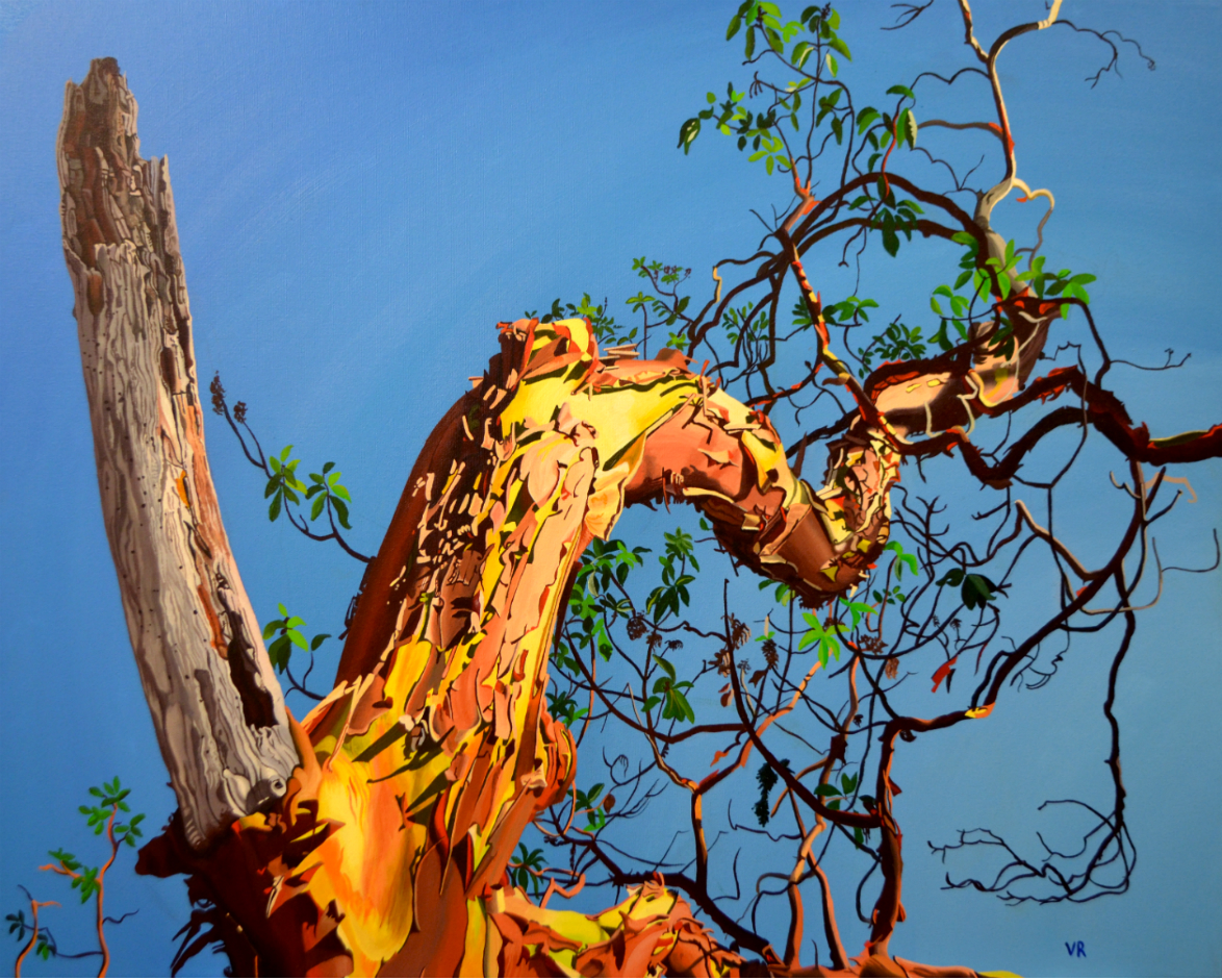 Commission - Arbutus    24 x 30    acrylic on canvas