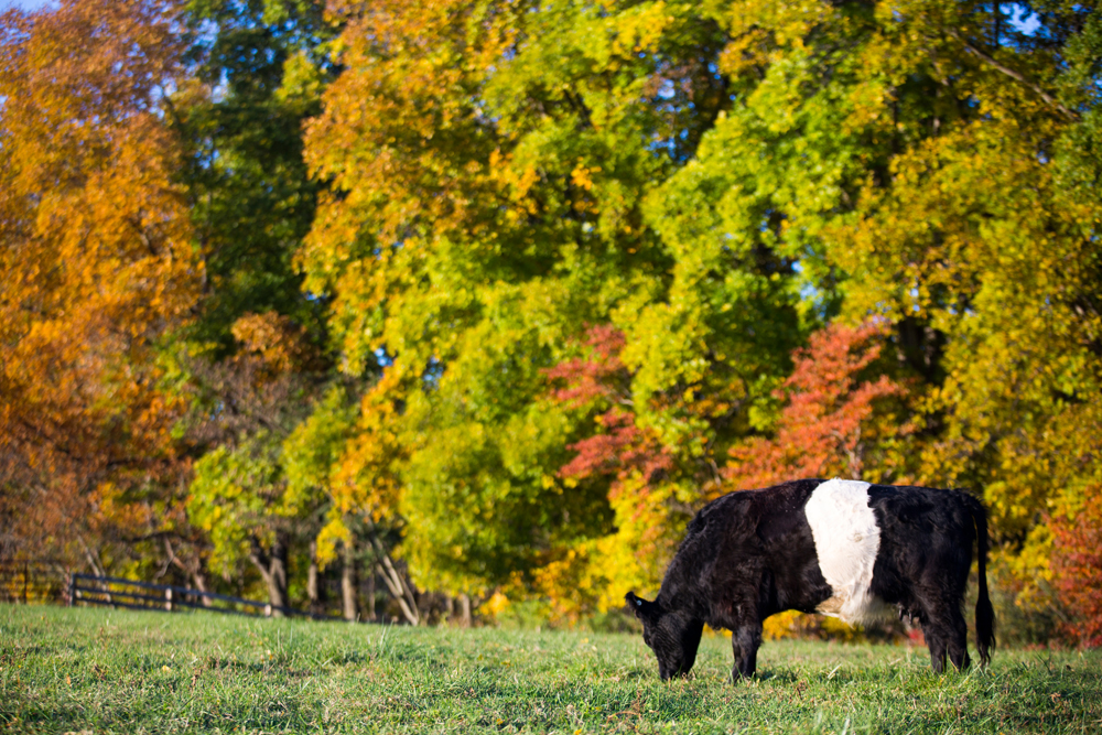 BagleyBelties_Oct2015_023.jpg